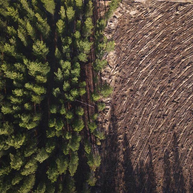 How the market for carbon credits will increase UK tree planting