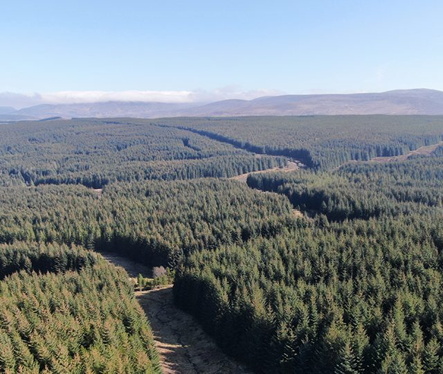 Forestry Sector Remains Strong in First Half of 2020