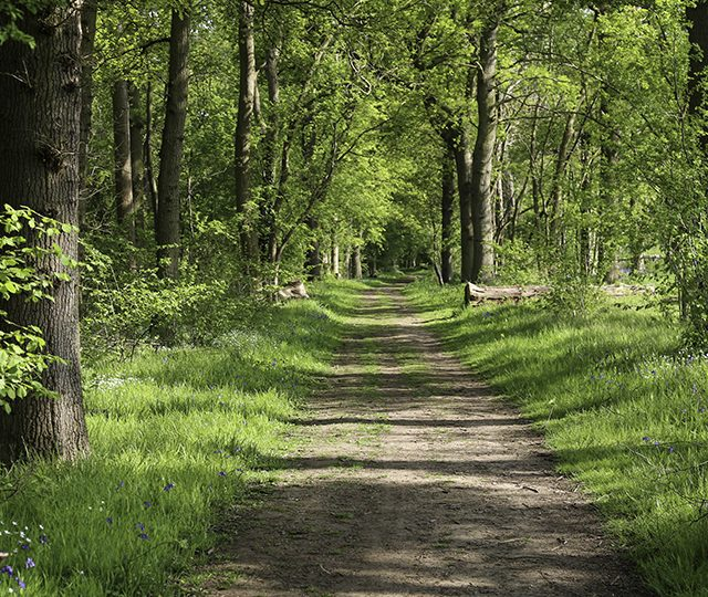 Developing a tree risk strategy – advice for landowners