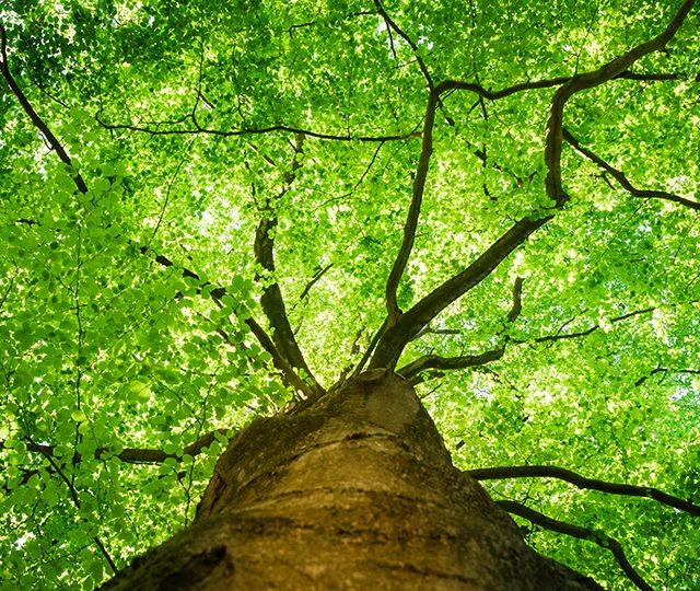 Accelerating Woodland Creation & Management Conference 2021