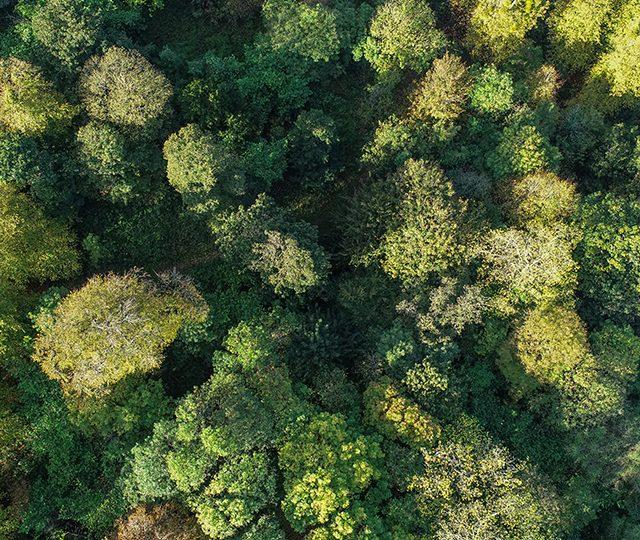 Fresh thinking needed to unlock woodland creation