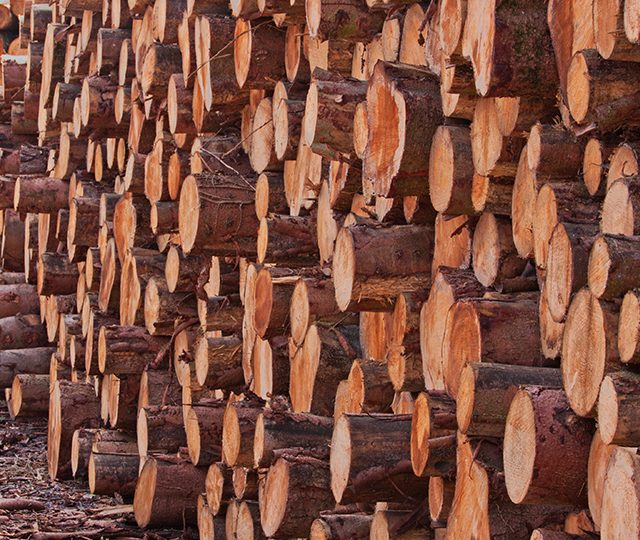 Timber price outlook is promising for UK growers