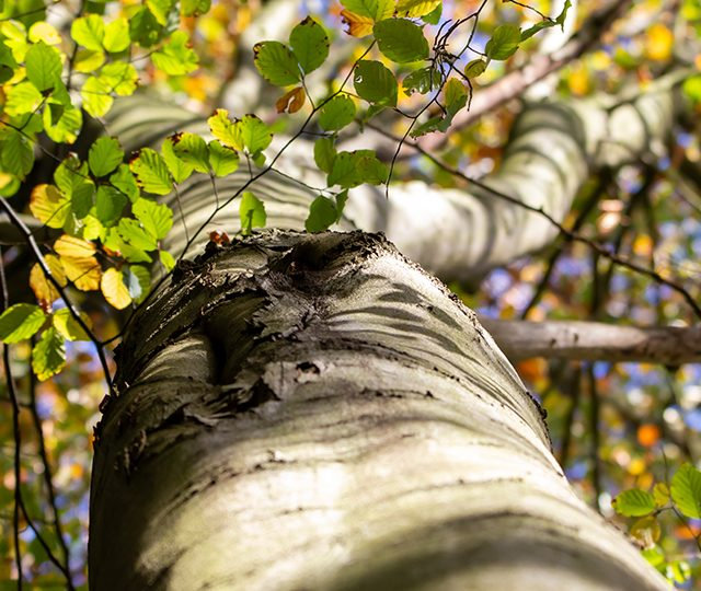 3 key changes which could drive more tree planting