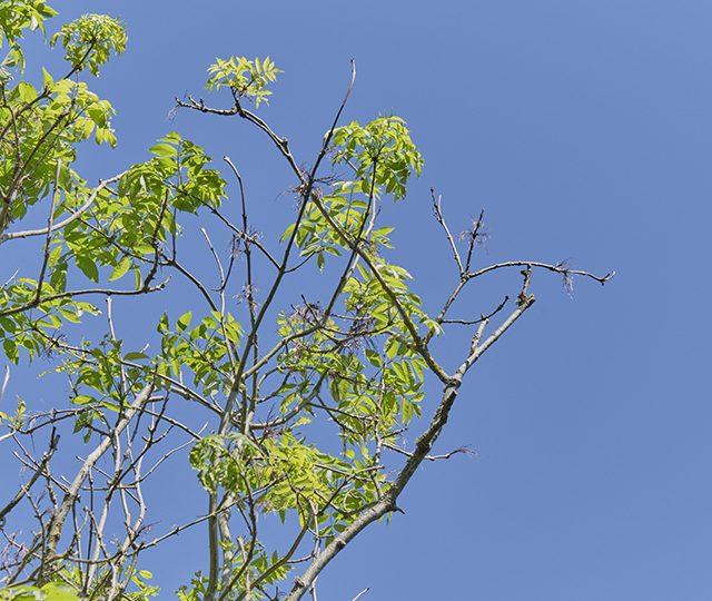 Tree Health pilot scheme opens in England